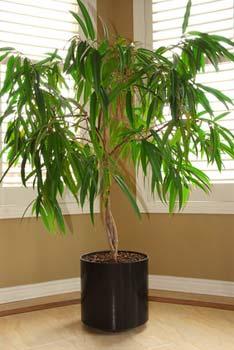 Rega das plantas de interior ou em vaso - Macetas para plantas de interior ...