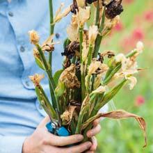 Poda das plantas com flores