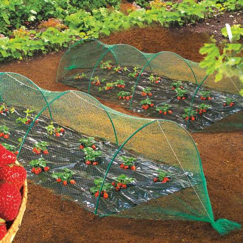 rede anti aves para hortas 2 x 5 metros venda rede anti aves para hortas 2 x 5 metros. Black Bedroom Furniture Sets. Home Design Ideas